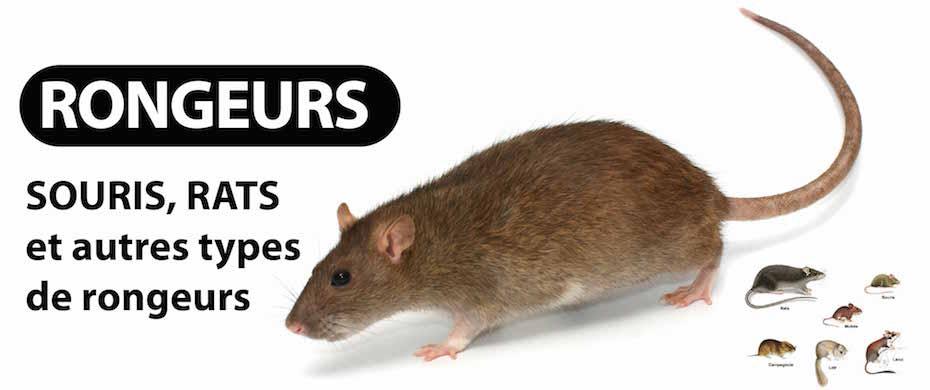 entreprise deratisation TOULOUSE (31) ET HAUTE-GARONNE