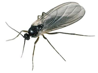 anti moucherons moustiques ales gard 30