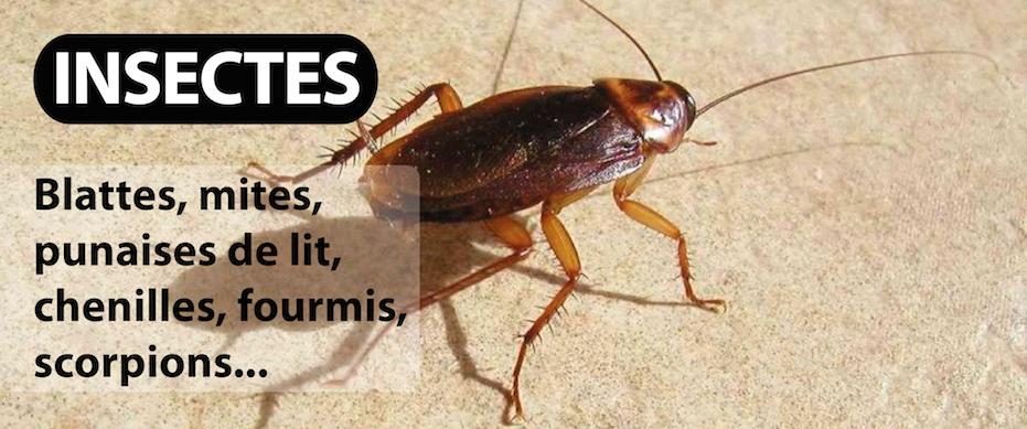 entreprise de desinsectisation de blattes cafards punaises de lit mites puces fourmis
