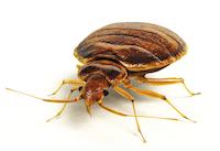 D sinsectisation anti blattes cafards punaises de lit - Se debarrasser des punaises de lit ...