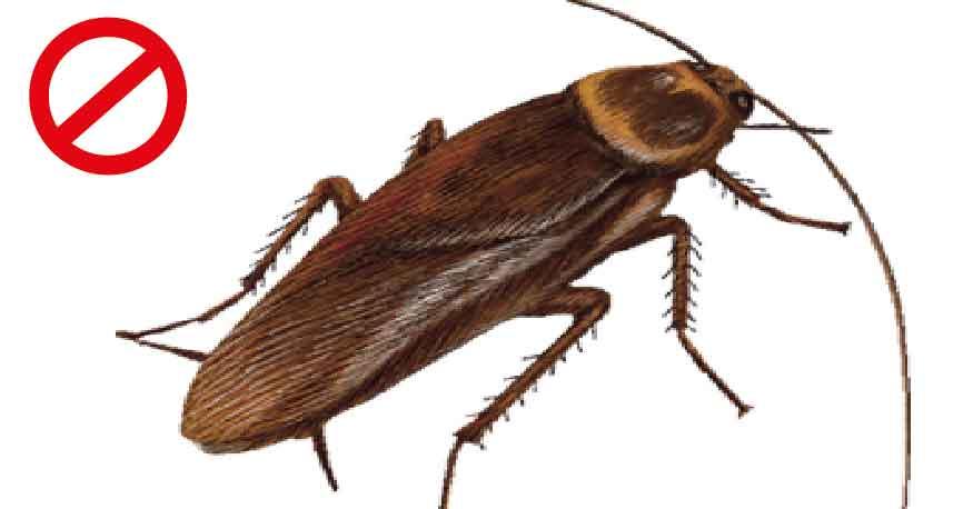 insectes et d sinsectisation toulouse fr. Black Bedroom Furniture Sets. Home Design Ideas